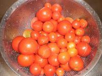 Tomato_001